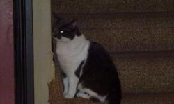Due to allergies we need to find a new home for our 2 cats. Our male is a beautiful grey and white domestic short hair. He is 2 and a half years old and is neutered and declawed. Being declawed he is strictly a house cat. He is completely healthy and is