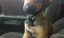Beautiful 4 month old female cross puppy named Bean. Has had her shots and been dewormed. Can walk on leash, loves car rides, and is almost fully house trained. Also kennel trained.(sleeps in it at night) mom weighs close to 75lbs. Bean is already