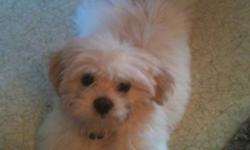 I have a 3month old puppy, male, white very friendly nd cuddly. Loves people nd children. Needs a loving home? This ad was posted with the Kijiji Classifieds app.