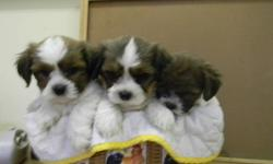 "DogPatch Puppies (est.1996) is closing in November due to sale of property. Price reduced from $500 to $400. Friendly, happy, very non allergenic and smart. ""Love Life Dogs"". Reserve a puppy now and pick-up when they are ready to leave. Pups will have 1st"