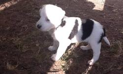 Variety of colors!Cute and adorable.These puppies are friendly and playful.They are 3/4 Border Collie and 1/4 Husky.