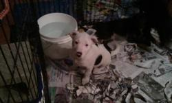 REDUCED...Must Go... .......Unique Markings and Colouring....1Females(2 females sold) and 3 Males(1 male sold) left...7looking for a special someone to love and be loved by....Housebroken, dewrmed, healthy,very intelligent, friendly,  socialized...
