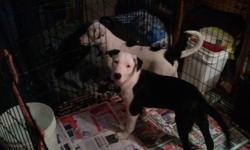 3 beautoful boys needing forever homes...each with unique markings and colouring...housebroken, extremely intelligent, dewormed, friendly, well socialized, good with adults and kids and other animals....please call after 6pm to meet them