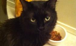 Black/Silky fur Green eyes And its a male .trained to use the kitty litter . Supplies not included . Three years old in cat years . Very gentle cat . Very cuddly and loving. Needs a new family :) can't keep it anymore . Never home to take care of it .