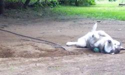 chien husky noir et blanc, vit dehors, a environ 6ans et a juste besoin de plus d'amour.
