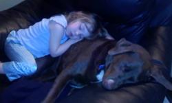 We actually live out in MacGregor, I need a great home for my 6 yr old Chocolate Lab Border Collie cross, he is fixed and his shots are up to date. I am expecting my third child and just don't have the time and space needed for my dog. He needs a big
