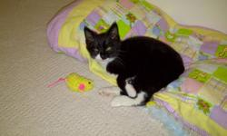 This little kitten needs a lot of love, care and attention. We would keep it ourselves, but unfortunatly we just don't have the room for him. We already have a number of pets in our home.   We are not sure of the age or breed of this adorable little guy,