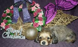 Older pups 650.00 and up               Ready NOW To Approved home in Smooth Coat Welcome to HeavenlyHund Reg'd Hounds, We have longs and smooth 6 week old pup      creams, blk/creams, & blk/tans   from  our multi champion sires & dams. > Please visit our