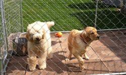 large 7.5w x 13l x 6h chain link dog run. already assemble but is easily taken apart. In excellent condition. Comes with 24x24 patio pavers for underneath(approx 28pavers worth over $200 alone) built a fence so no longer needed. $200 firm sorry no