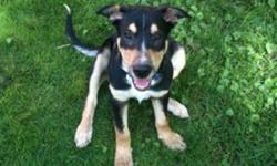 Elvis is a 5 month old boarder collie, blue heeler puppy. He is very sociable with other animals and has lots of energy to play. Elvis was one of 7 puppies that my dog Daisey had months ago. We decided that we wanted to keep one of her puppies however