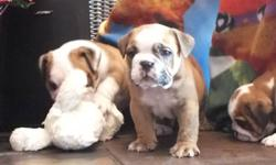 Adding any pet to your home is a huge commitment ? Adding a bulldog to your home is also a huge expense. All puppies are cute, and bulldogs even more so, but to avoid heartbreak you might want to do some research before you buy. Click on, or cut & paste