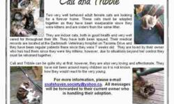 Breed: Domestic Long Hair - buff and white Tortoiseshell   Age: Adult   Sex: F   Size: M Cali and Tribble are two very well behaved adult female cats are looking for a forever home. These cats must be adopted together as they have been inseparable since