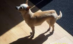 We are selling our female chihuahua, her name is princess, she`s around 5lbs. she has been raised around other animals, and children.. She will be 3 years old on Nov,30.. We want her to go to a good home, were she will get lots of love and attention.. If