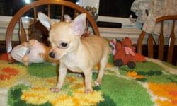 I need a new home. I am 8 weeks old. pee pad trained, eating and drinking on my own, I come with my 1st shots and dewormed twice, and my vet checkup and a puppy pack. I am a sweet little girl that likes everybody. I have been around cats, other dogs and