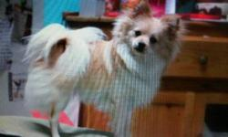 Female Pomeranian almost 2 yrs. of age. VERY pretty dog, and loves to cuddle and be played with. I have another male dog, so it's really hard for me to care for both dogs, and that's why I've decided to sell her to a loving family. Someone who has time,