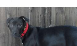 We have a 6-month old mixed breed female that needs a good home and lots of love. She is very loving and smart and gets along with other dogs, cats and has been around children as well. She is very loyal and will make a great guard dog. Currently she is