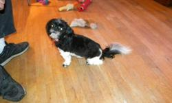 Shih Tzu Birth date is August 22, 2009. Black & White- Spayed, Crate trained, spoiled, house broken to puppy papers. As a shut in I cannot take her out. She love walks, and come with everything like, grooming tools, dishes, Crate, food, toys, etc. I am