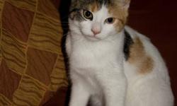 Meet Maya! She's a wonderful, friendly, cuddly kitten aproximately 4 months old. We've had her now for a just for a little while after getting her from a friend, but unfortunately we have someone who has an alergy. She is great with kids and plays with