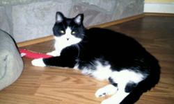 FREE -Black & white cat named Princess- adopted from Petsmart in 2008. She is an indoor/outdoor cat and is spayed.Ok with kids and dogs, but she prefers not to be with a dog. We are working more and can not dedicate as much time to her. She really needs a