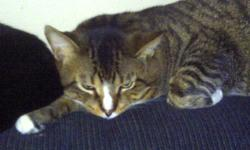 I am moving and I really need to find a home for my 2 cats one is sinmease sorry can't spell !! if u are interested please call 289-228-9941  St. Catharines