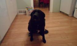 free for a good home , this gorgeous black lab needs lots of room , shes a 4yr old lab thats very playful , very good with kids and other animals . she listens very well.  need to go asap as we dont have the time to take care for her. call 417-8449