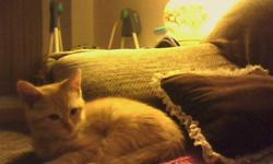 i am giveing away my male orange tabby, he comes with all his stuff FREE, he has a feeding dish, cat carrier, litter box, litter and litter box bags. he is a very cuddley kitten and loves attention. he is COMPLETLY.. litter trained.. the reason for