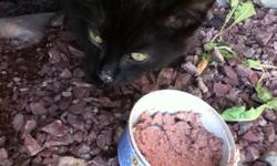 He is black with a little bit of orange on his head.He needs a home asap.