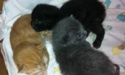 Free kittens ready to go to homes November 15-16. One orange tabby, one black, one black with orange/brown patches and one gray (taken) This ad was posted with the Kijiji Classifieds app.