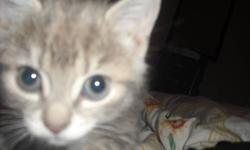 Lovable playhfull cat for free to a good home. My son developed an allergy and we cannot keep her anymore.  We would love to see  her go to a good home with lots of love. Thanks
