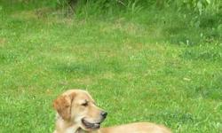 We are looking to re-home our Golden Retriever. She is an indoor family dog. She is fully trained , and has a laid back and loving temperament. She has been spade and is up to date on her vaccinations. We are not in a rush to re-home her , but rather are