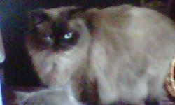 Hi, unfortunately for us, we need to give away our cats for health reasons. They are all friendly, loving and get along with other cats. There are 2 black himi persians one male and one female they are 9 months old, one cream and chocolate himi persian