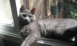 Sassy came to us by patiently waiting for food at one of our Dartmouth feral colony feeding stations. She was obviously starving but more so, losing her fur. Our rescuer immediately picked her up and took her to the vet. This lost pet had been spayed in