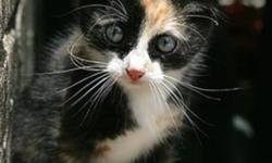 I didn't think it would be so hard to find a kitten so now I'm posting a wanted ad. I want a cute little kitten! I don't want a pure black one though, a white and grey one would be nice.. or calico.. no older than 2 months... please email !! :) I can take