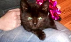 beautiful black female kitten with blue eyes free to a good home. call 227-6664 for more information.