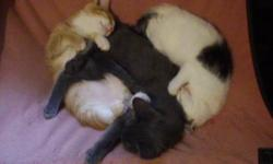 We have a couple of young cats and kittens that need a new home . They are all very social able have been brought up around a large dog and small dog and get along with other cats . love human contact all have their own personality. If you are a special