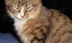 **Another Update** I am happy to say again that all the kittens have found home but the mom is still looking for a loving family. She is approximately 2 years old and is very gentle and affectionate and would be a great addition to your family. She was