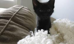 Four kittens for sale $75.  Cute as buttons.  Indoor and outdoor, kittens have been loved by two small children and are very friendly. Ready to go to new wonderful homes.  Call 250-862-6187.