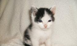 Kittens Free to good home! Ready in 2 weeks. Week of Oct 16th. 6 kittens available Photo 1- kitten 1,male photo 2-kitten 2, female photo 3-kitten 3,female photo 4-kitten 4,female photo 5-kitten 5,female photo 6-kitten 6,female