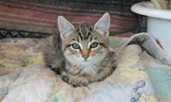 I have kittens ready for new loving homes.   I have three grey and white, two orange and two black and orange.  If you have room in your home for a new member please feel free to contact Niki at  250-577-3302