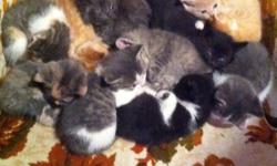 The cutest kitties you will ever see! They are so sweet and are a variety of colors. They are used to dogs and other cats as well as kids. Very affectionate! Call or email if I don't answer leave a message! :) This ad was posted with the Kijiji