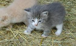 Three kittens to give away to good homes.    Color:  1 orange, 2 grey with white   Ready to pick up.