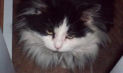 """LOST a big black and white male cat, with a pink collar, lost in the Frost ,Angus, Mckeown St. area.  He's mostly black with a white belly and mouth area and a white """"bib"""", white feet and half white and black chin. His name is Matty, he's about 10 yrs."""