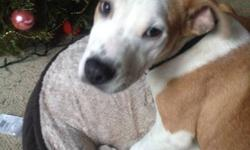 Very sweet female puppy rescued from a high kill shelter in California. We are an independent rescue organization who pull dogs form high kill shelters in California and transport them up to Canada for a better chance at adoption. This lovely girl is very