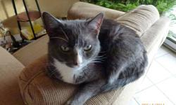 Purr-cy is a male cat , indoors, fixed, no fleas , all shots  and is in perfect health He needs a home, when my exwife left last year she didn,t  take him. He is great with other cats and kids