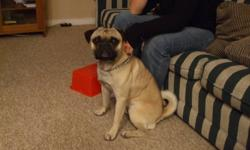 Our family has a 2 year old male pug, which our children absolutely love. However, we are unable to give him the attention and time he most deserves, so we are looking to find him a FOREVER home, with person(s) who have the time and love he needs. He is