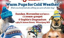 Are you thinking of adding a new puppy or dog to the family? Come down and meet many of our dogs! A wide variety of ages, sizes, and breeds of dogs to choose from. Sunday, November 27/2011, from 11am-4pm @ Sophie's Dognasium (1469 St. James St. Winnipeg,