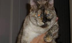 Beautiful, mature Flame Point Siamese and Tortie Point Siamese. Both are females. Very friendly. Both have been spayed and declawed front and back. These dear girls have never been outside, except for their trips to the vet, so they would like to live in