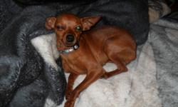 she is just over a year and a half,purebred, red , very small dog she is only 4 lbs maybe, not fixed, shots up too date, located in northern bc