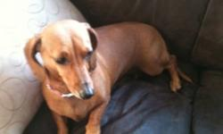 5 year old female daschund brown. Needs to go to a home without children. We unfortunately can't keep her. This ad was posted with the Kijiji Classifieds app.