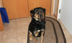 NEEDS A HOME.... MOVING OUT OF COUNTRY CAN NOT TAKE HER WITH ME. Would make an excellent family dog, or farm dog. 1 1/2 year old female Rottweiler cross. Very Friendly, House Broken, some basic training. Great with children.  Included, Bowls, Some Food